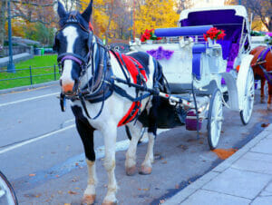 Hest og vogn i Central Park
