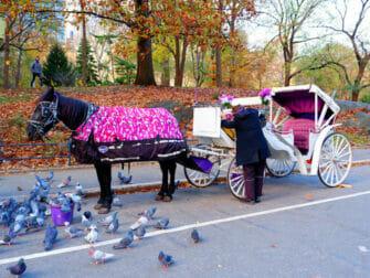 Hest og vogn i Central Park - Hest