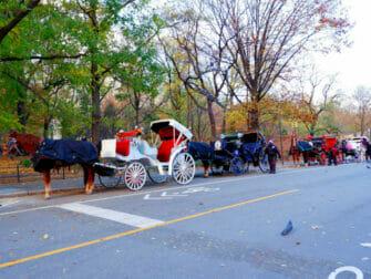 Hest og vogn i Central Park - Gyllen vogn
