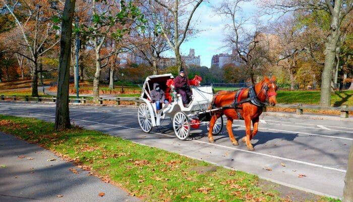 Hest og vogn i Central Park - Vognene