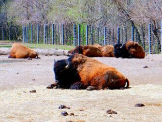 Bronx Zoo i New York - dyr som slapper av